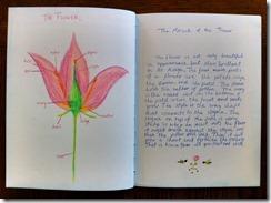 5th grader 10 flower