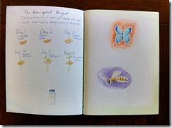 5th grader 13 beans bees