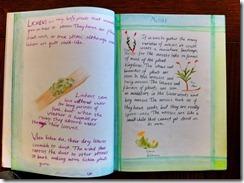 5th grader 5 lichen