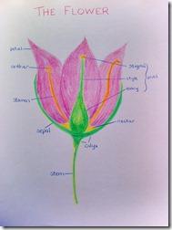 mom 3 flower