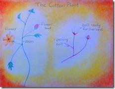 mom's cotton